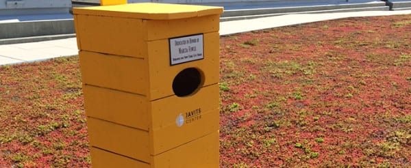 Javits-colored birdhouses on the facility's green roof provide shelter for American kestrels.