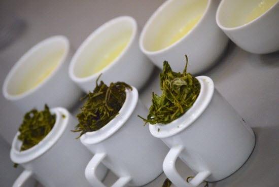 world tea expo cups
