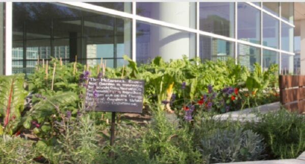 McCormick Place Garden Grows On