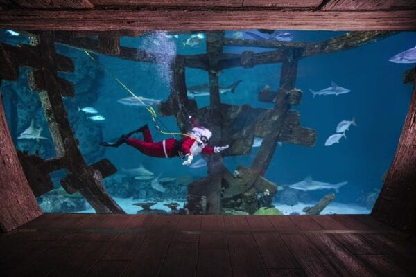 Diving Santa at Shark Reef Aquarium Dec. 21-24